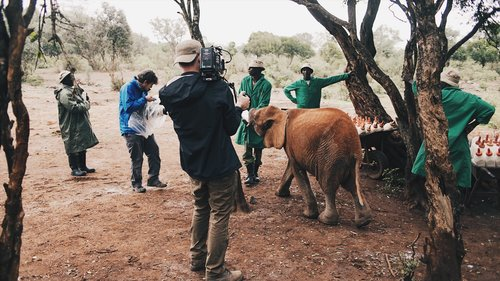 Two video production experts filming elephants outside